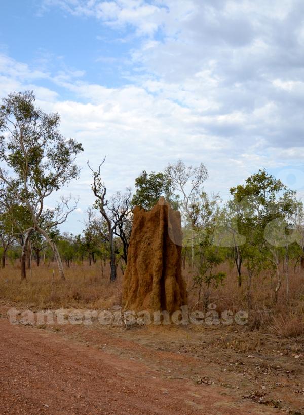 termittårn