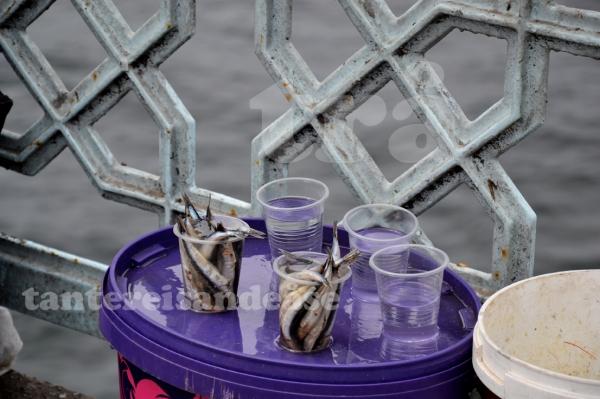 istanbulfish