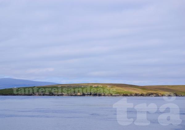 shetland#14