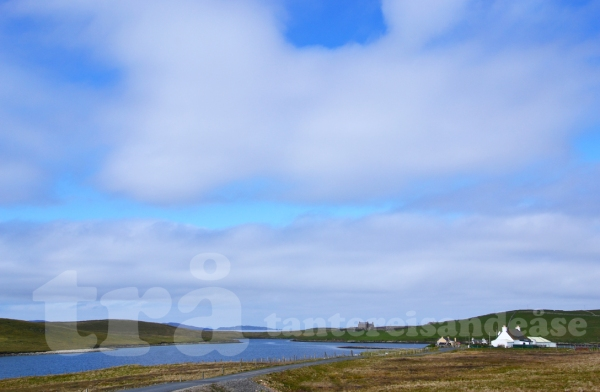 shetland#17