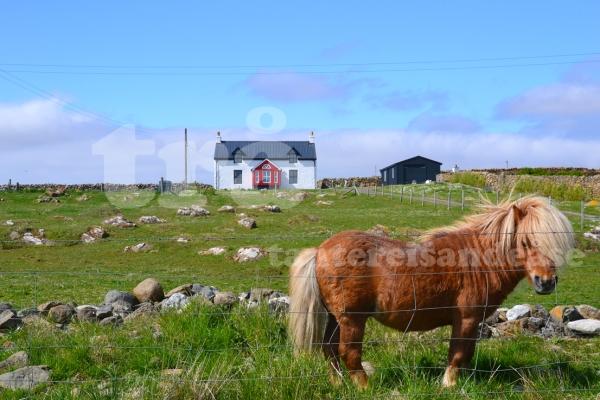 shetland#21