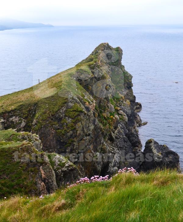 shetland#33