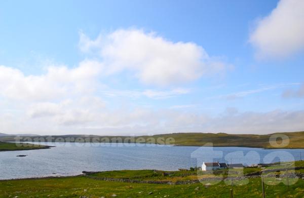 shetland#35