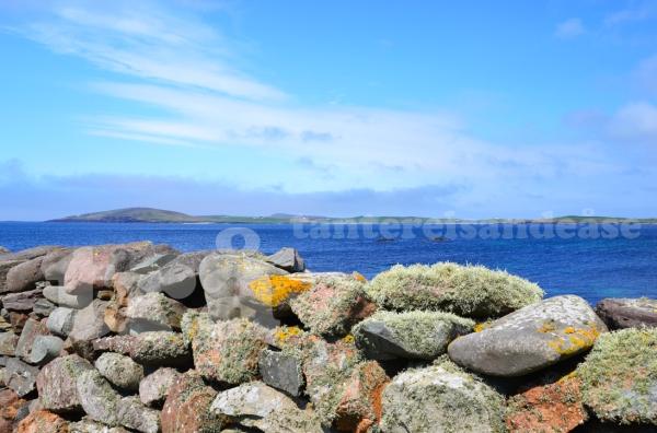 shetland#37