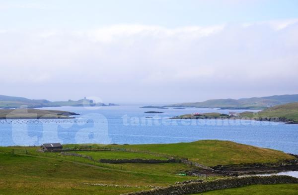 shetland#38