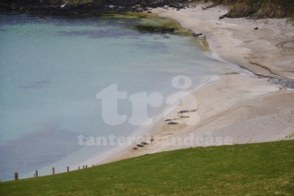 shetland#9