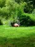 jardindesplantes#3